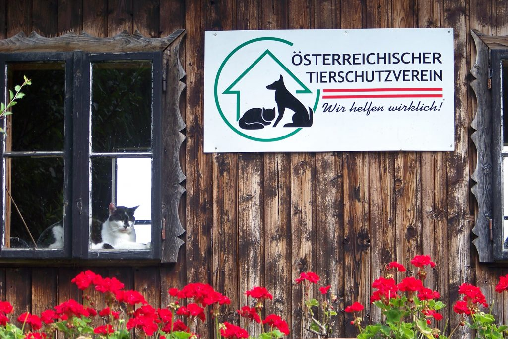 Der Österreichische Tierschutzverein hilft Tieren in Not.