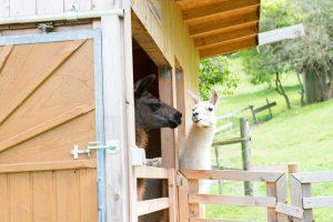 Wir geben alles, um Tierleid in Österreich zu verhindern.