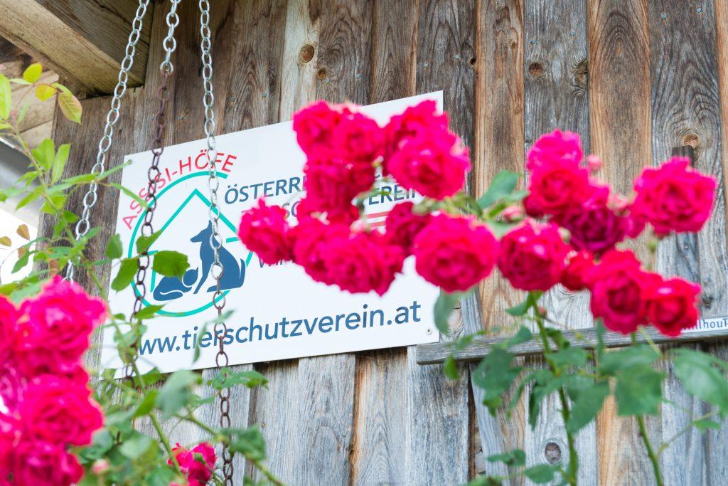 Herzlich willkommen beim Österreichischen Tierschutzverein.