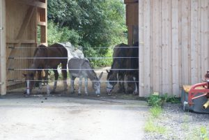Pferde und Esel auf dem Assisi-Hof Oberwang