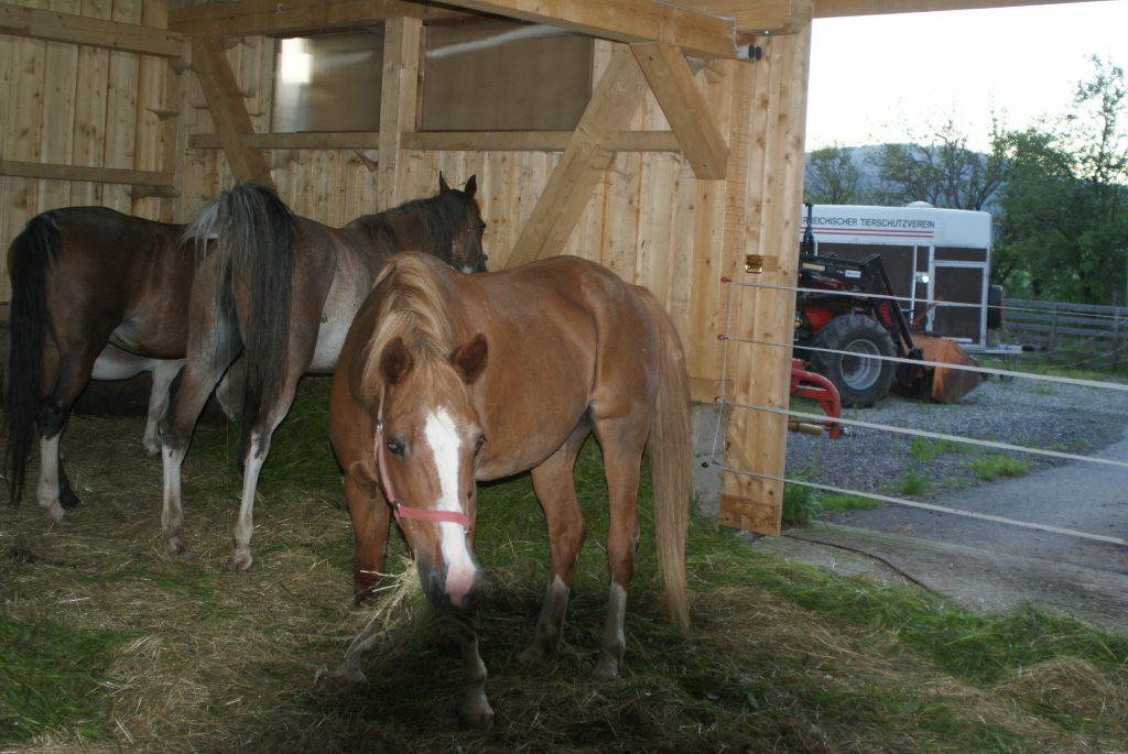 Pferde auf dem Franz von Assisi-Hof Oberwang
