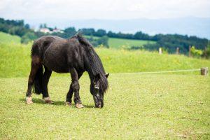 Pferd auf dem Assisi-Hof II.