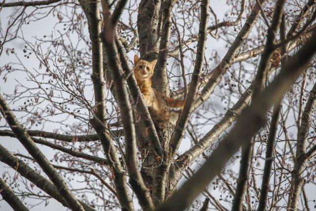Die Katze saß in etwa 25 Metern Höhe auf einem Baum fest.