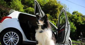 Denken Sie an Ihren Hund und erleichtern Sie ihm die Reise.