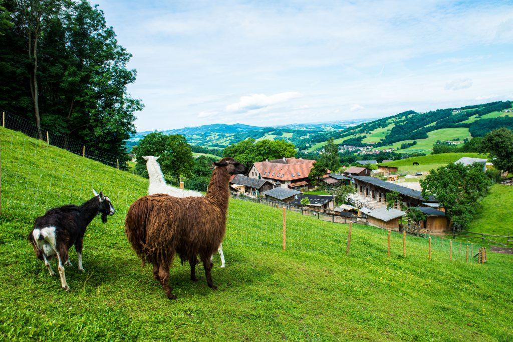 Hilfe für Tiere in Not: Der Österreichische Tierschutzverein