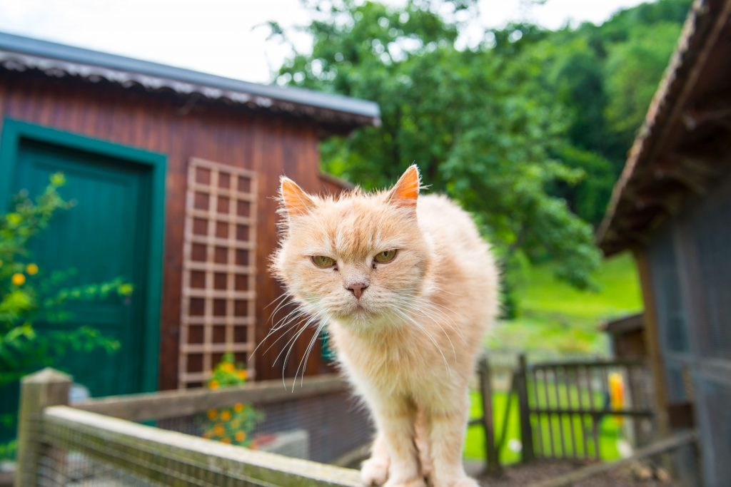 Der Österreichische Tierschutzverein: eigenes Katzenhaus am Assisi-Hof