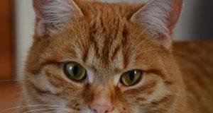 Haustier-Abschussverbot