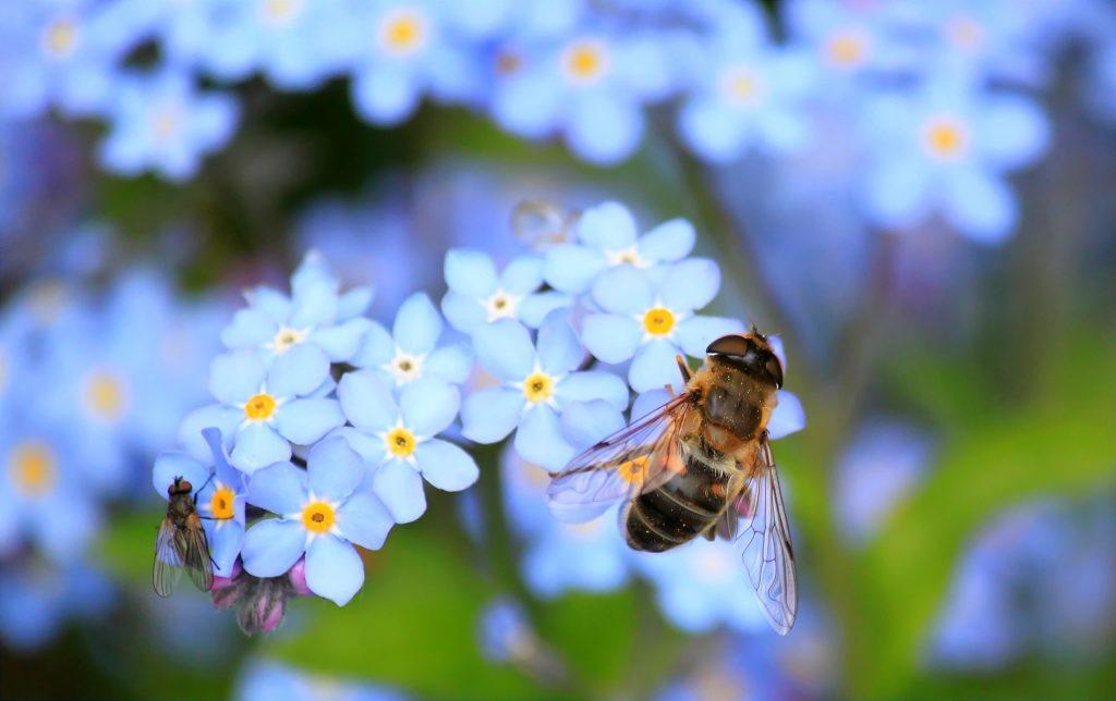 Bienensterben - Bienen retten!
