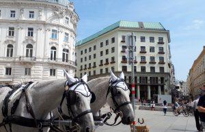 Fiaker-Pferde