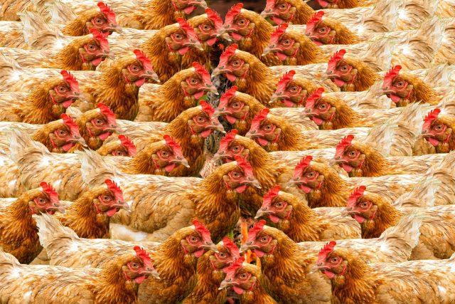 Billigfleisch Massentierhaltung