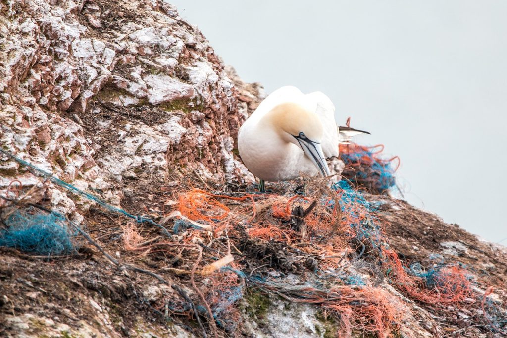Viele Tiere verwechseln Plastik mit Nahrung