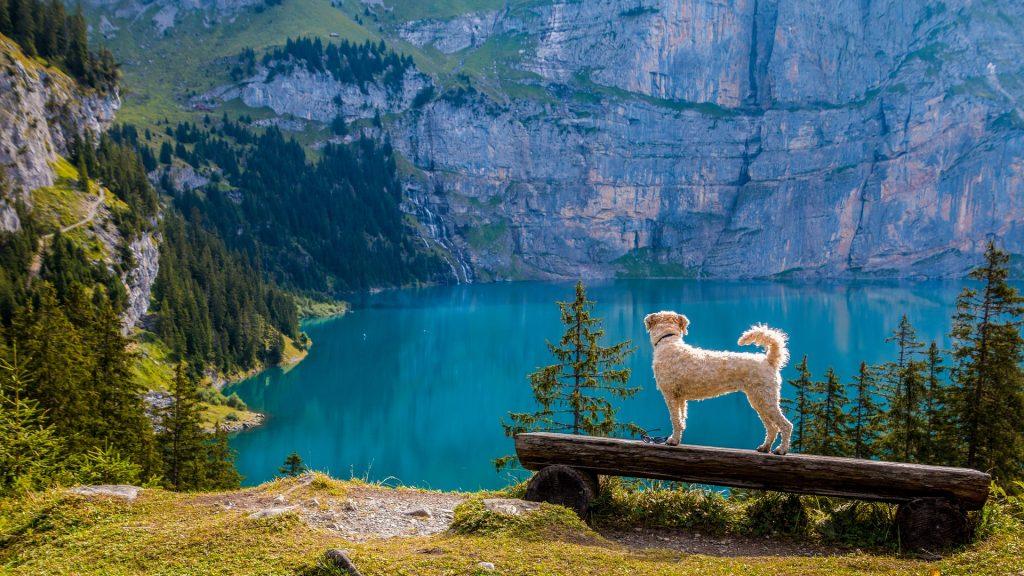 Wandern mit Hund macht Spaß