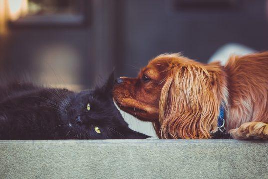 Hund und Katze richtig füttern