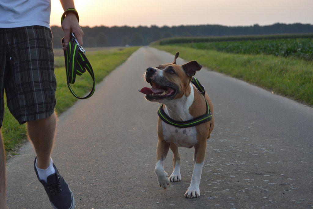 Hundeführerschein Österreich