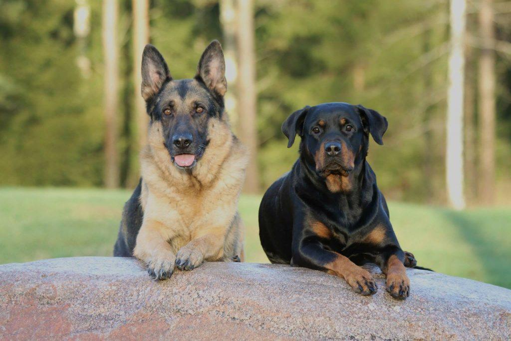 Hundeführerschein empfehlenswert