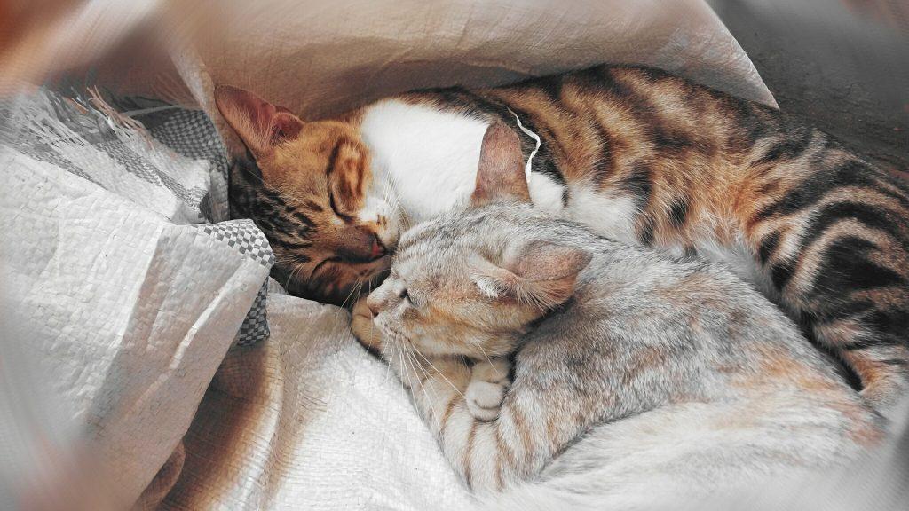 Winterdepressionen bei Katzen