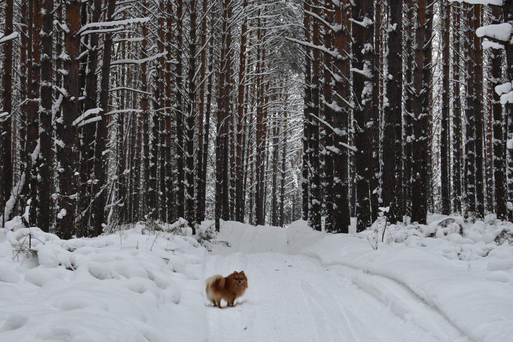 Wintertipps für Hund und Herrchen