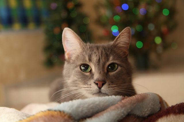 Silvester Katze