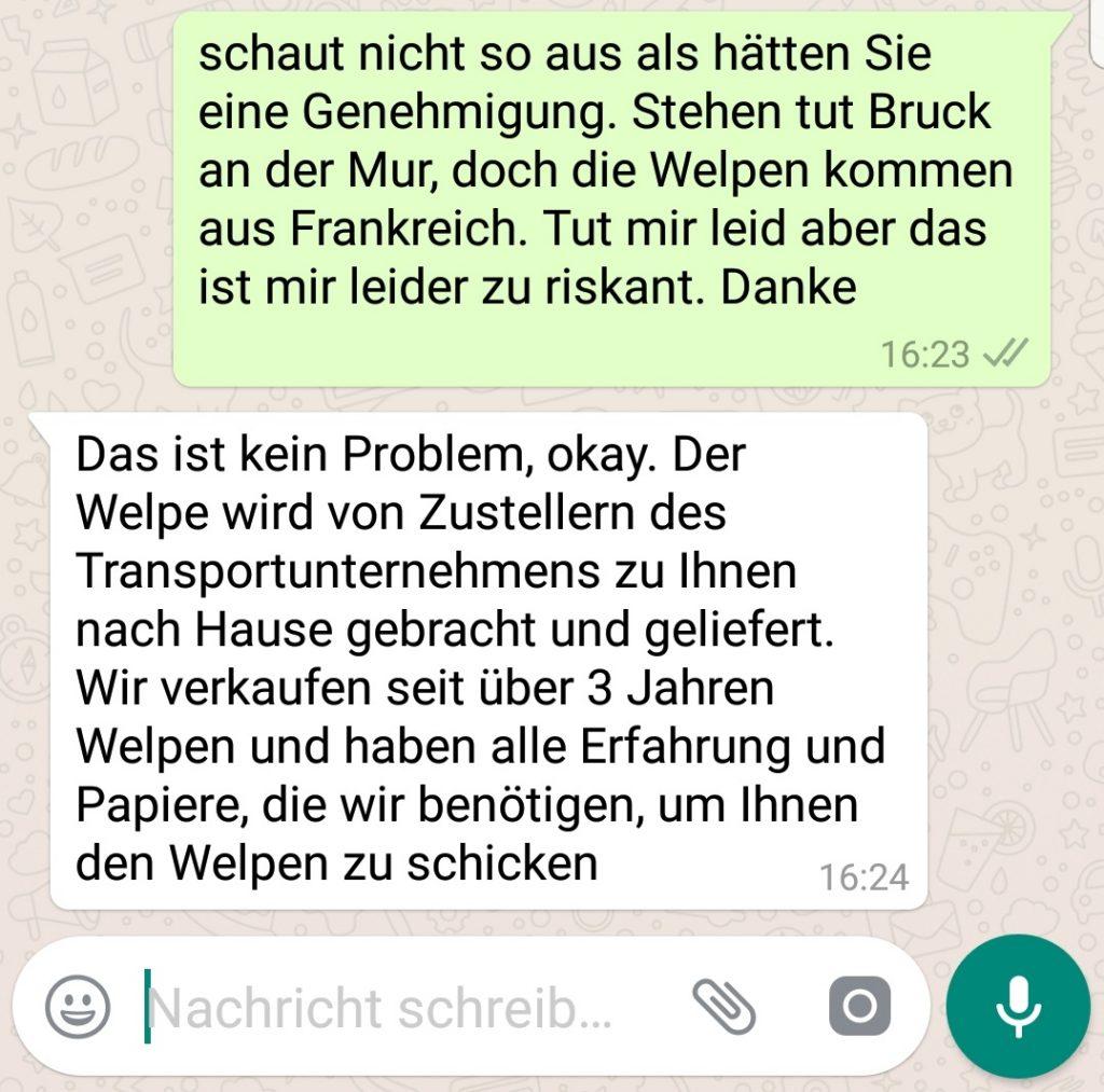 Welpenhandel WhatsApp