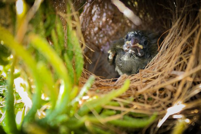 Vogelbaby gefunden