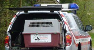 Tierrettungsauto