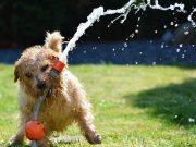 Sommer-Tipps für Hunde