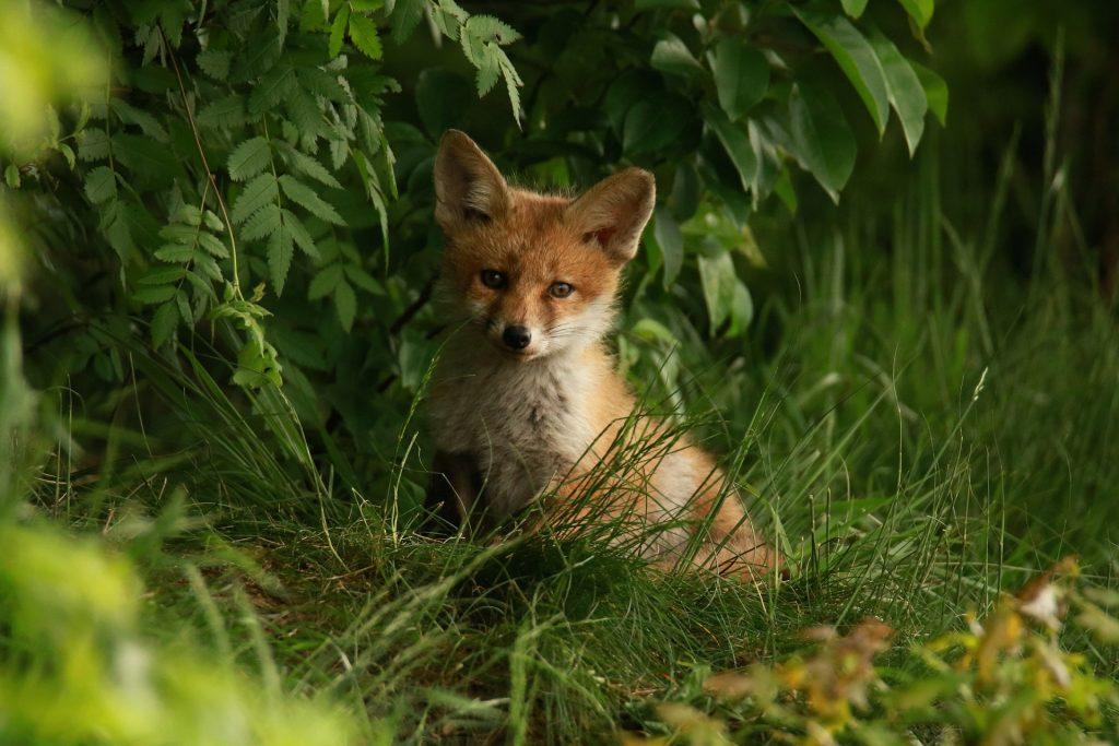 Sie haben ein Wildtier gefunden - was tun?