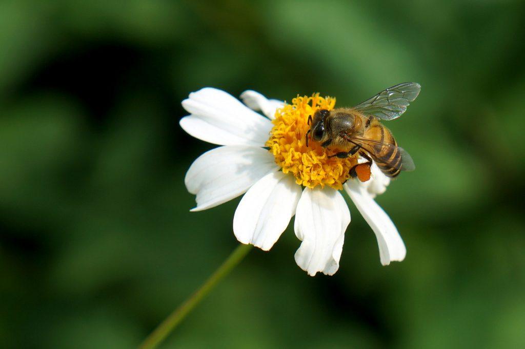Bienen schützen