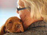 Hunde sind gut für unsere Gesundheit