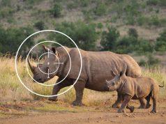 Jagdsafaris