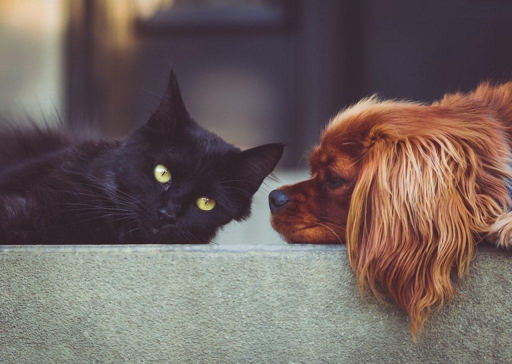 Corona bei Hund und Katze?