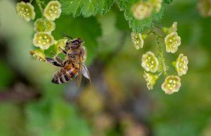 Bienen in Grafenschlag