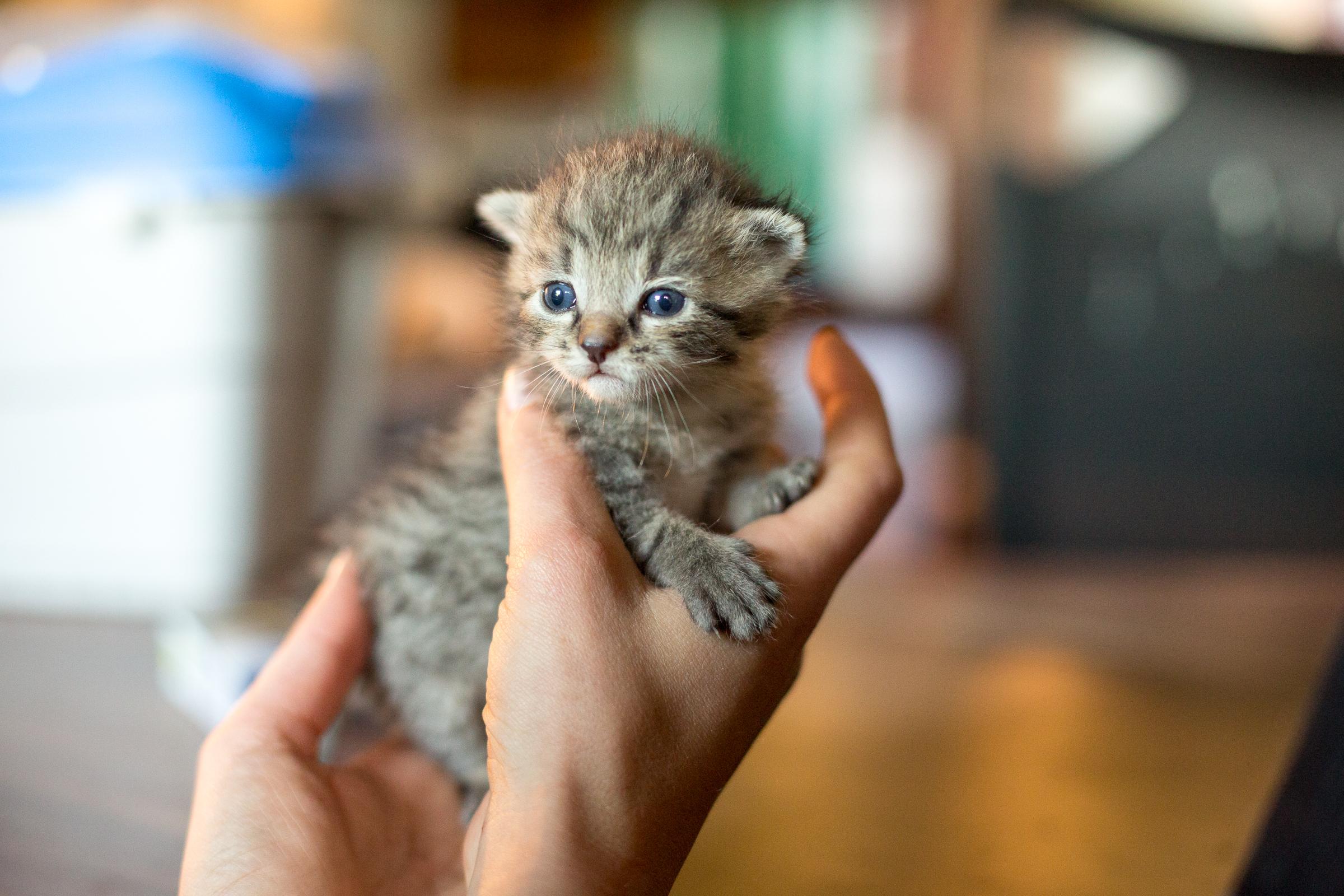"Katzenbaby ""Findus"""