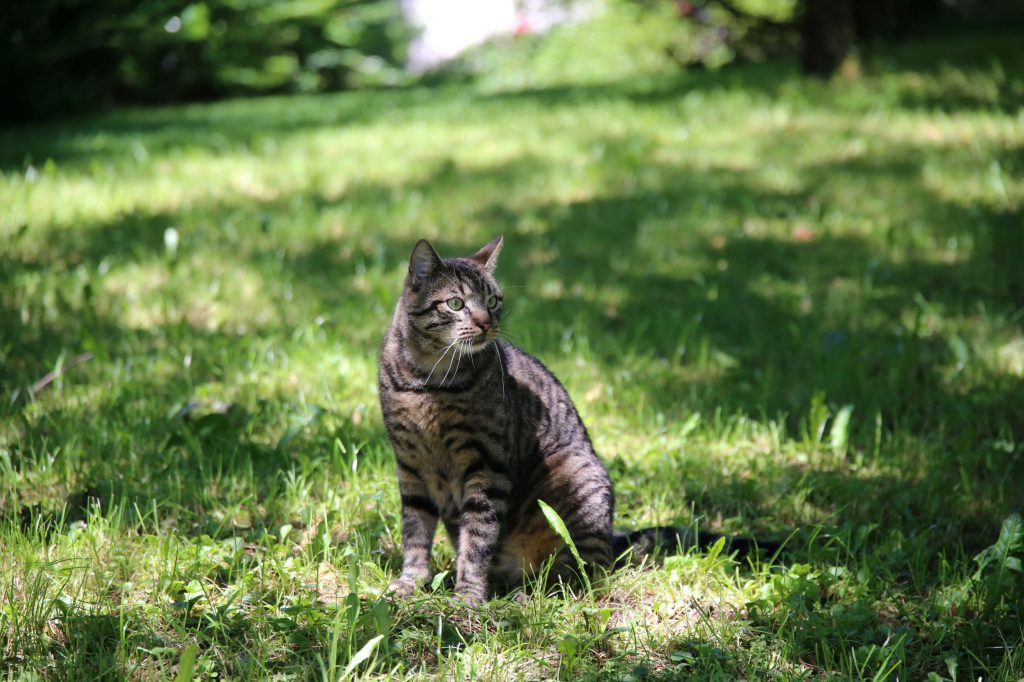 Kater Billy
