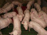 EU-Tierschutzgesetze