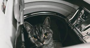 Gefahrenquellen für Katzen im Haushalt