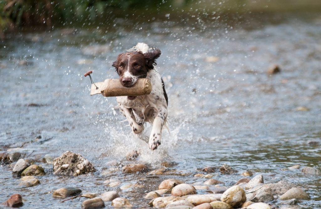 Wasservergiftung beim Hund durch Apportieren