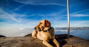 Wandern & Baden mit Hund