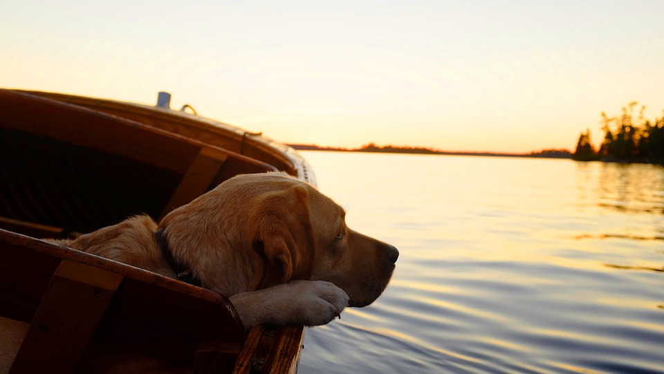 Wandern & Baden mit Hund - tierisch schöner Heimaturlaub