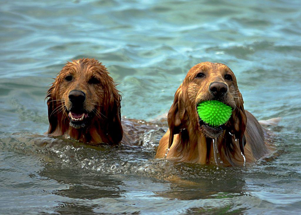 Wasservergiftung beim Hund durch Spielen im Wasser