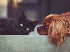 Mietrecht Haustiere