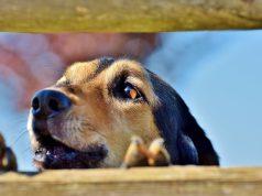 Tier aus dem Ausland adoptieren
