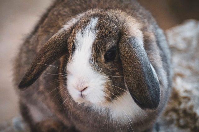 artgerechte Kaninchenhaltung