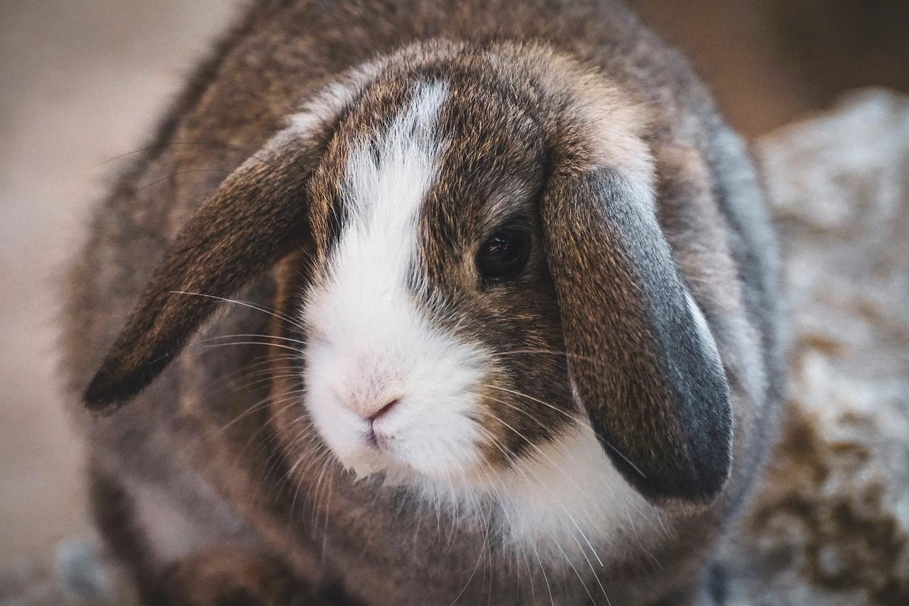 Artgerechte Kaninchenhaltung   8 Tipps für Ihr Langohr
